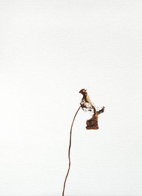 Quello che resta #8 - Acquarello su carta - cm 56 x 76 - 2013