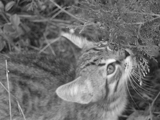 Petit chat curieux