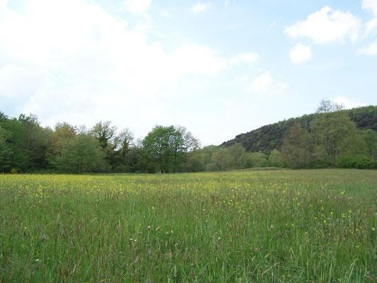 Prairie de fauche au printemps