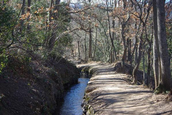 Petit canal d'irrigation