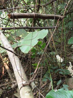 Rettenfalle im Wald