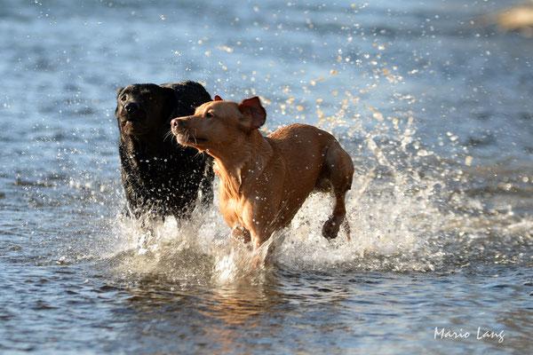 Fotografie Hunde