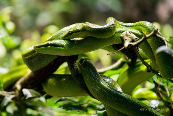 Fotografie Schlangen
