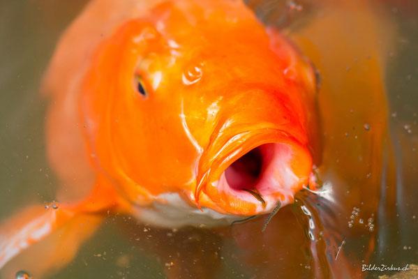 Fotografie Fisch