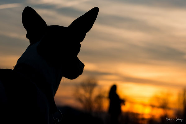 Fotografie Hund