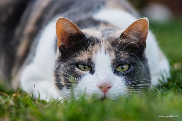 Fotografie Katze
