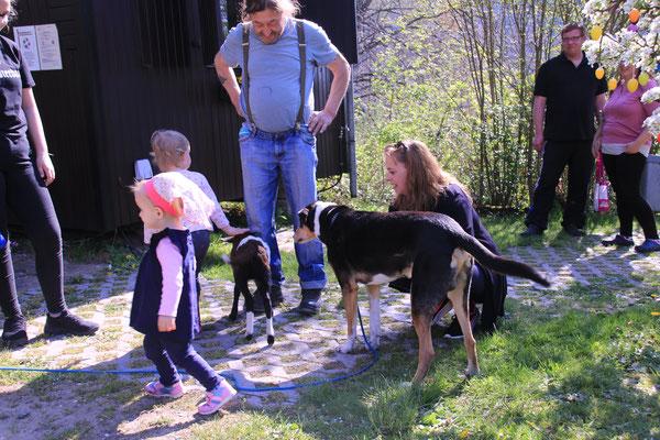 """Campingplatzhund """"Henry"""" war auch ganz fasziniert von dem Treiben"""