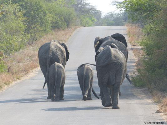 Elefantenfamilie - Kruger Nationalpark