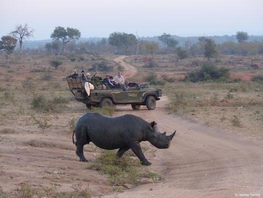 Praktisches Training - Spitzmaul Nashorn Begegnung