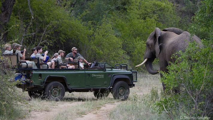 Praktisches Training - Elefanten Begegnung