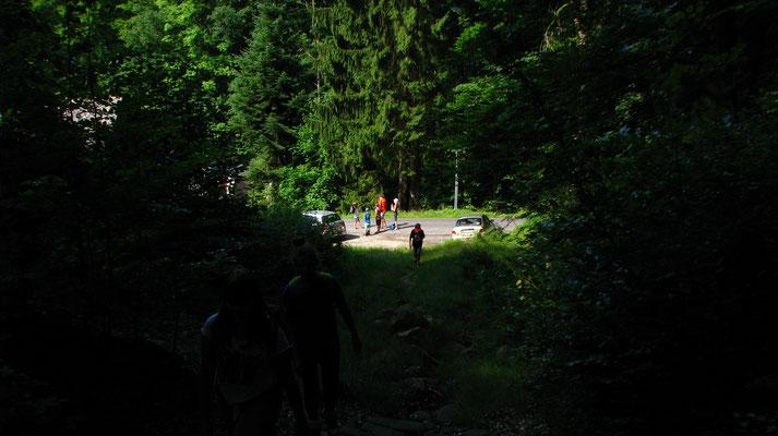 Hier geht es hinein in den schönen Wald