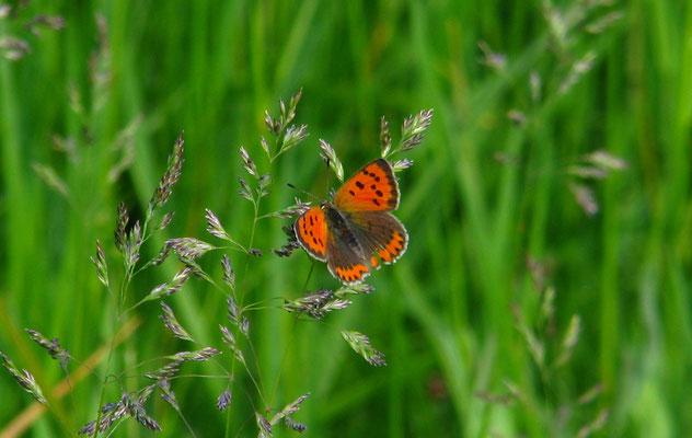 Zweiter Schmetterling