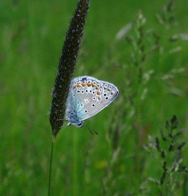 Dritter Schmetterling