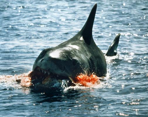 Les Dents De La Mer de Steven Spielberg - 1975 / Horreur - Animal Tueur