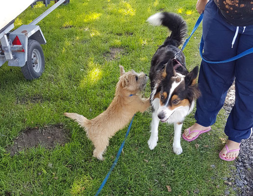 Winnimar mit neuem Freund
