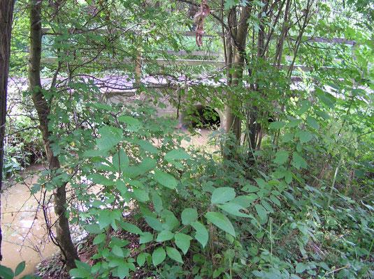 Bild 3   Der Steinforstgraben zwischen dem ersten und zweiten Damm ist geflutet.