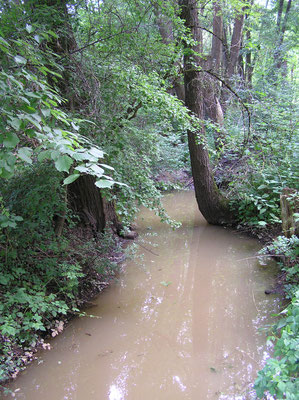 Bild 2   Blick Richtung Alterlanger See