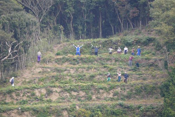 木庭作収穫作業の様子