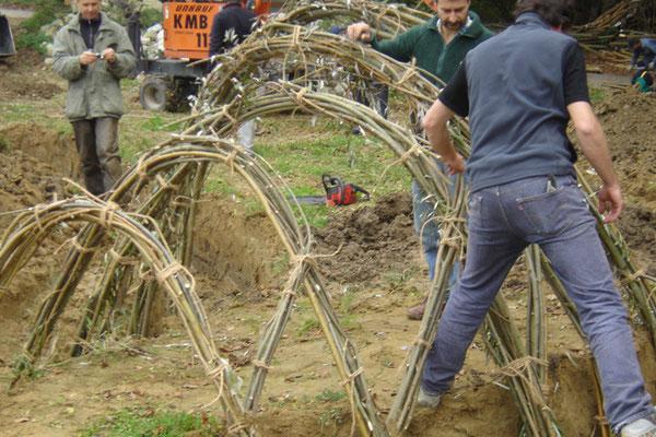 Bau des Weidenkarpfens