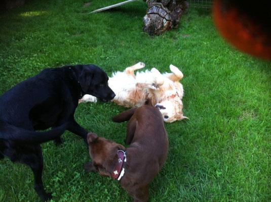 Elli, Baloo und Leni