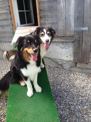 Benji und Ares