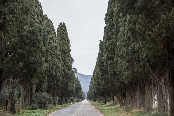 Die 4 km lange Zypressenallee