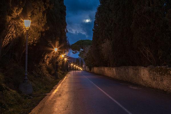 Bolgheri - Zypressenallee bei Nacht