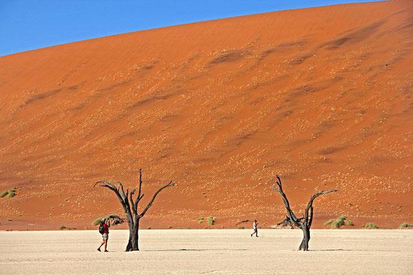 ナミビア撮影許可取得、撮影コー...