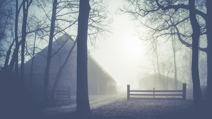 Misty morning in Heiloo