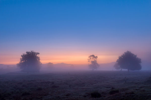 Misty Drenthe