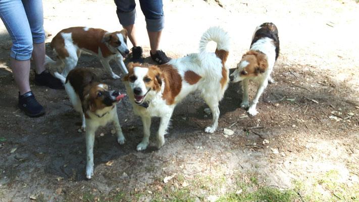 Alma-Lotta, Esme, Ayuna & Anni