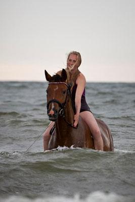 RossFoto Dana Krimmling Pferdefotografie Fotografien vom Wanderreiten Reiten im Meer Schwimmen