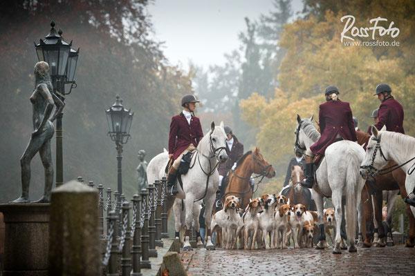RossFoto Dana Krimmling, Nienhagen Foxhounds 2015, Pferdefotografie, Jagdreiten