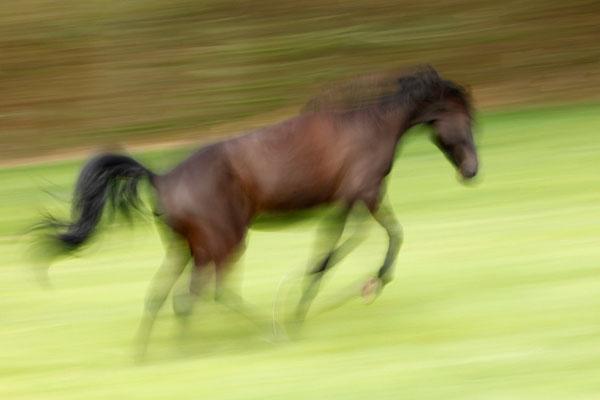 RossFoto Dana Krimmling Pferdefotografie Wanderreiten Freiberger Pferde Westernpferde Quarter Horses Altoldenburger Pferdeportrait Westernreiten Jagdreiten Kavallerie