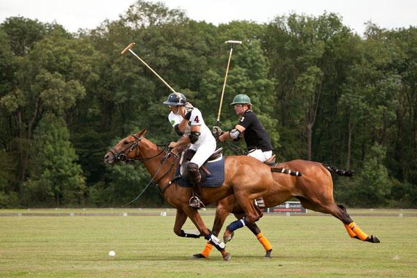 RossFoto Dana Krimmling Pferdefotografie Pferdeportraits Fotografien vom Wanderreiten Jagdreiten Polo Freiberger Pferde Altoldenburger Pferde