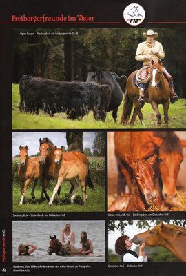 rossfoto, dana, krimmling, pferdefotografie, fotografie, wanderreiten, westernreiten, jagdreiten, kavallerie, kavalleriereiten, reenactment, freizeitreiten, ausreiten, reiten, freiberger, pferde, fohlen, hengst, fohlengeburt, pferdeporträt, franches, mont