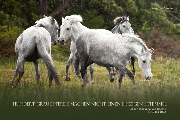 RossFoto Dana Krimmling Pferdefotografie Fotografien vom Wanderreiten Westernreiten Kavalleriereiten Jagdreiten
