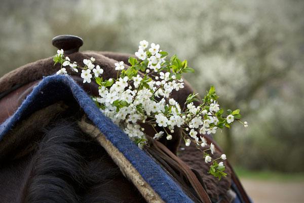 Rund ums Ross RossFoto Dana Krimmling Pferdefotografie Fotografien vom Wanderreiten Westernreiten