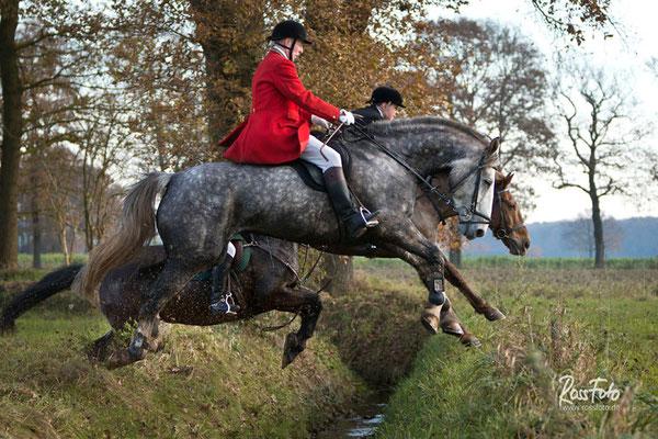 RossFoto Dana Krimmling Pferdefotografie - Slipjacht Winterswijk, Schleppjagd Winterswijk