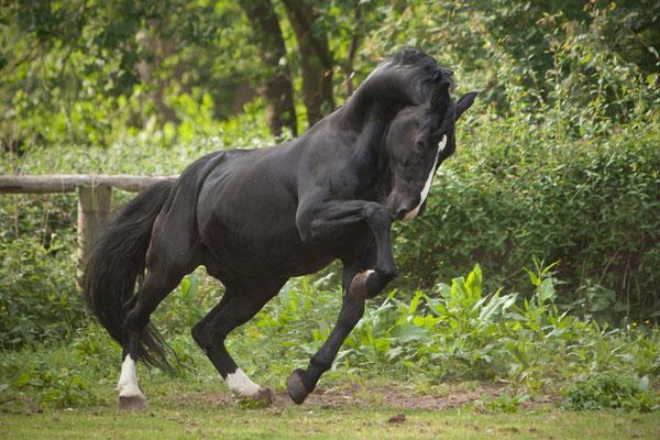 RossFoto Dana Krimmling Pferdefotografie Fotografien vom Wanderreiten Altoldenburger Pferde