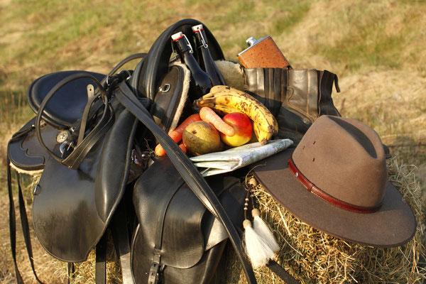 RossFoto Dana Krimmling Pferdefotografie Pferdeportrait Fotos vom Wanderreiten Jagdreiten Freiberger Pferde Altoldenburger Pferde Polo