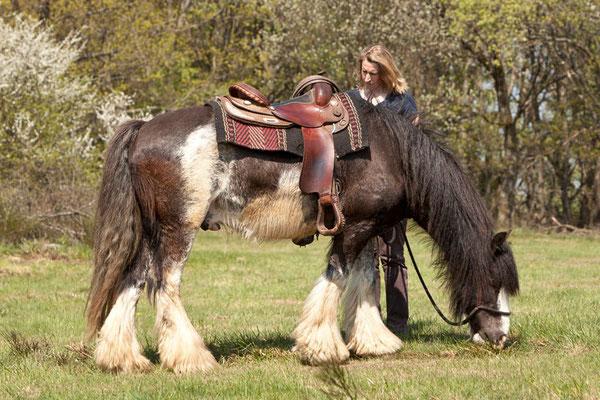 RossFoto - Dana Krimmling - Piets Adventure Trails - Pferdefotografie - Wanderreiten
