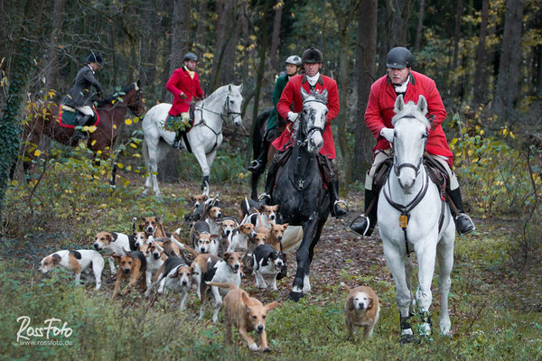 RossFoto Dana Krimmling, Cappenberger Meute, Aselager Jagdtage 2015, Pferdefotografie, Jagdreiten