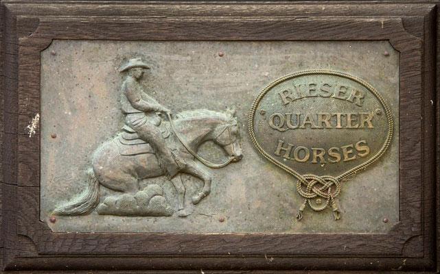 RossFoto Dana Krimmling Pferdefotografie Pferdeportrait Fotos vom Wanderreiten Jagdreiten Westernreiten Kavallerie Freiberger Pferde Altoldenburger Pferde Polo