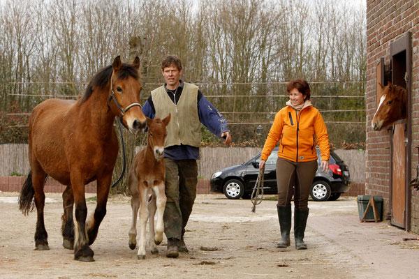 RossFoto - Dana Krimmling - Cäsar Franken - Fohlen auf Weide