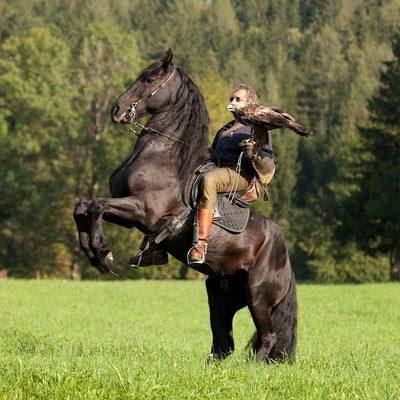 RossFoto Dana Krimmling - Pferdefotografie, Fotografien vom Wanderreiten, Theo Blaickner, Steinadler, Friesen