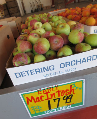 リンゴの早生種