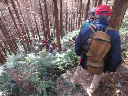 最後の滝「雨乞い渕」までは天竜美林の杉林を一気に下ります。