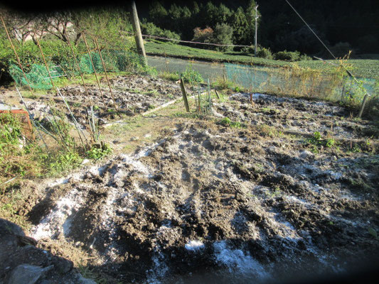 山間の畑は傾斜ばかりで鍬を使う作業がこたえます。
