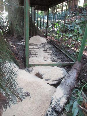 杉林の中で、近くにけもの道が有ります。